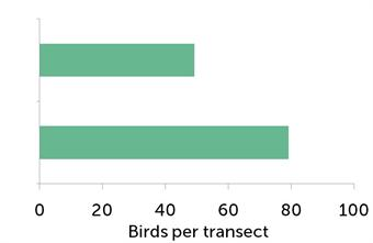Number of songbirds (species in the UK Biodiversity Action Plan) per study transect before management (top) and with habitat management plus gamekeeping (bottom).