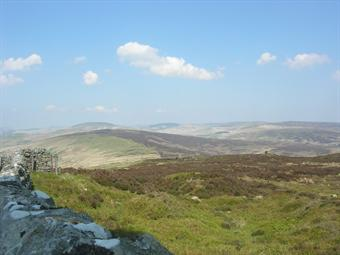 Moorland on Langholm Estate is managed for red grouse and hen harriers