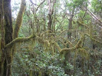 The Laurel Forest reserves on La Gomera are ancient habitat and important for water supplies