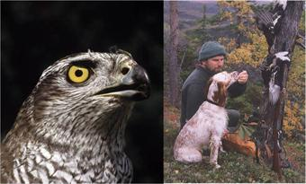 UNESCO recognises falconry, with raptors like this trained hawk, as a cultural heritage