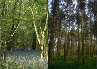 European forestry creates a variety of habitats for wildlife